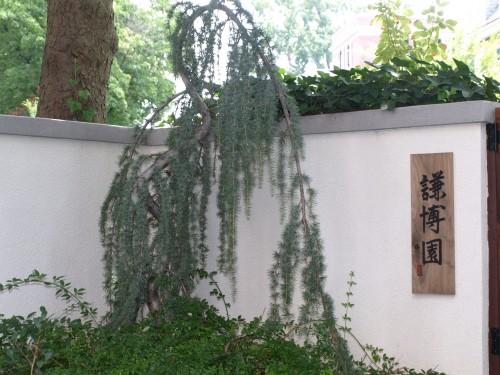 The Humble Blogger's Garden, pix by Maureen Neuman