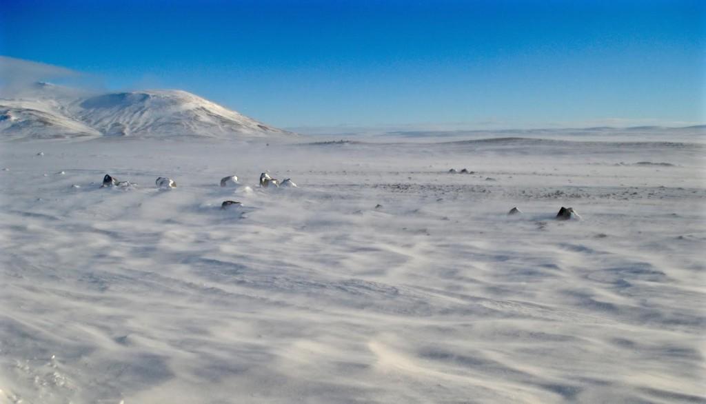 Iceland. Glacier